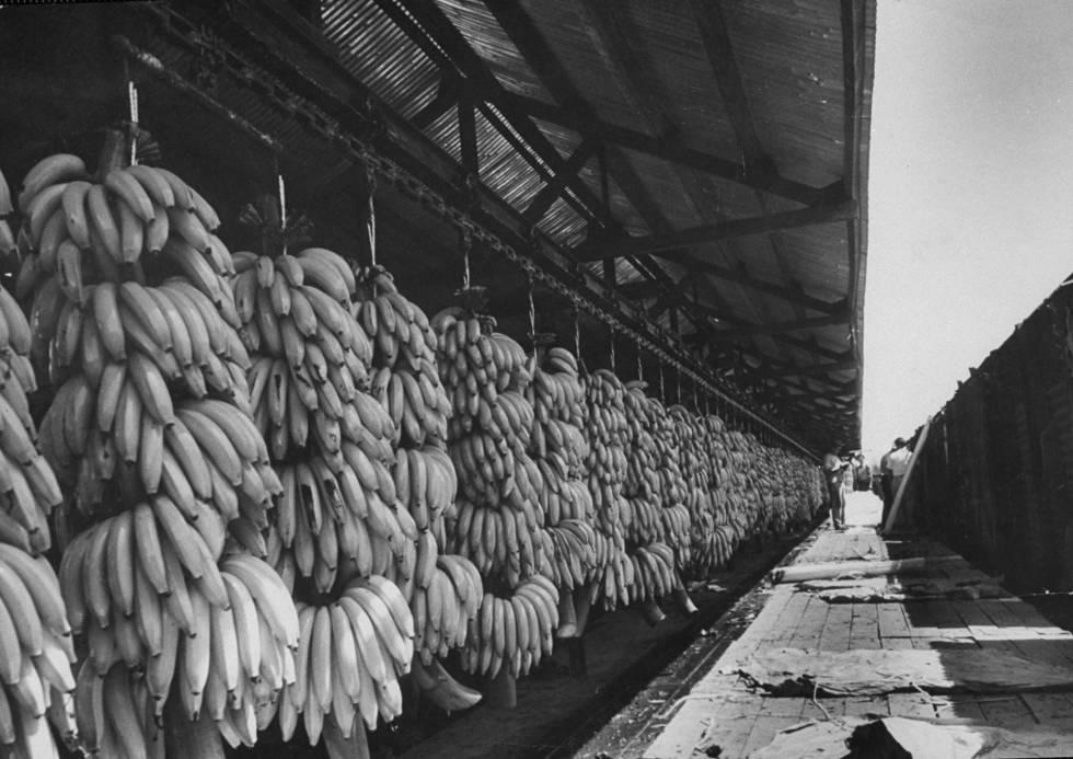 Plátanos de la United Fruit preparados para ser transportados.