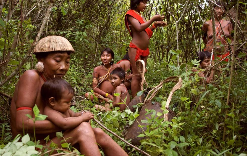 Los yanomamis cultivan unos 60 tipos de plantas, lo que supone el 80% de su alimentación (Brasil).