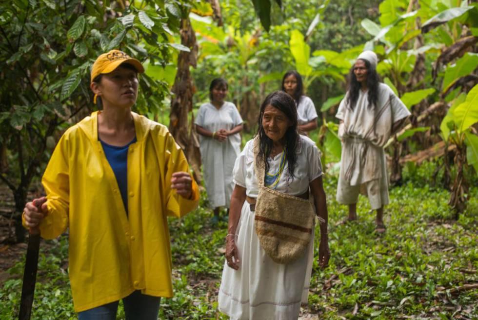 Habitantes del Amazonas recorren los cacaotales durante la visita del chef.