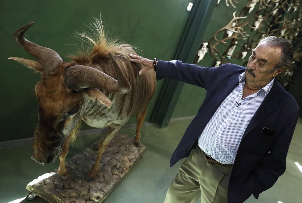 Marcial Gómez Sequeira, con el ñu dorado recién llegado del taxidermista.