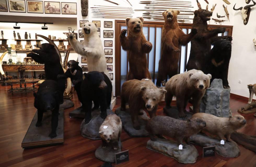 Colección de osos cazados por Marcial Gómez Sequeira.