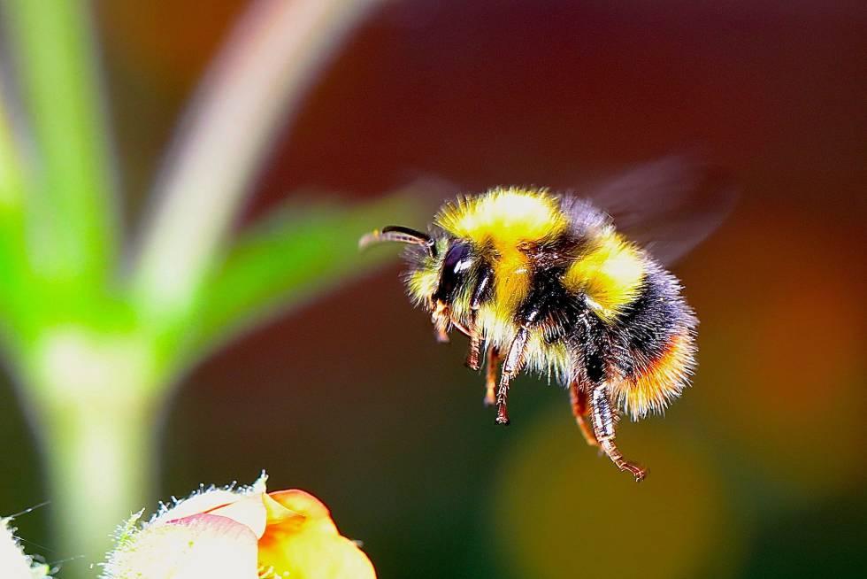 Más de un tercio de los cultivos humanos necesitan de los insectos y aves para su polinización