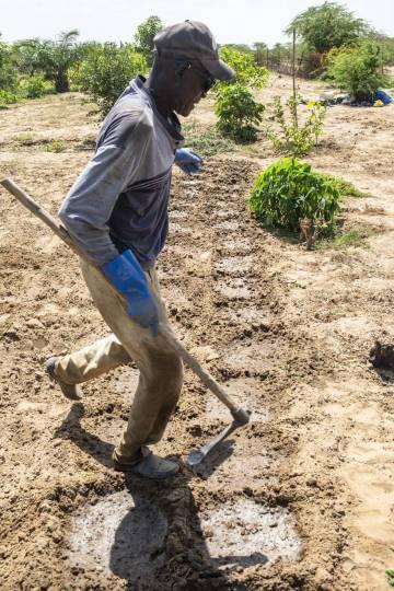 Un agricultor, en un huerto en Sanar, a los alrededores de Saint Louis.