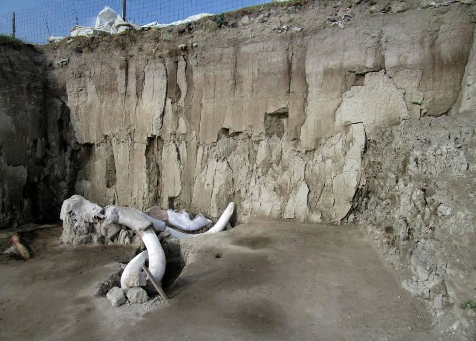 Restos óseos de un mamut en Tultepec, México.