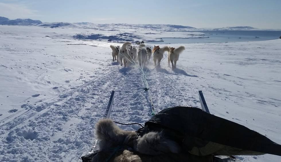 Perros de trineo en la bahía de Disko, en Groenlandia, en marzo de 2019.