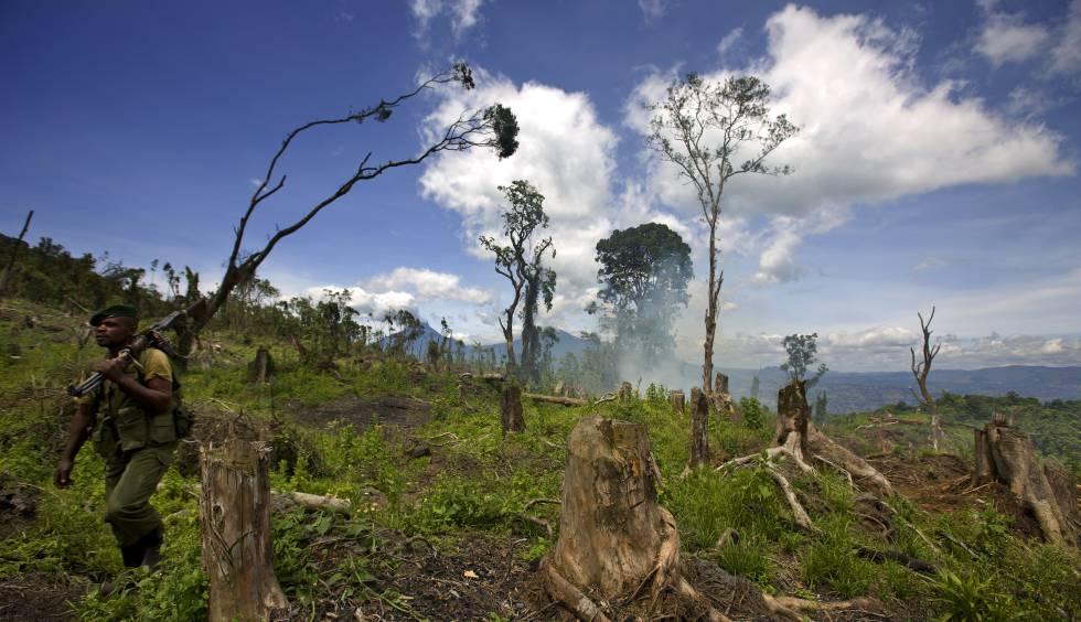 Una zona devastada del Parque natural de Virunga, en Kibati (República Democrática del Congo).
