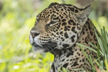 Tania, de ocho años, llegó a la isla San Alonso como reproductora.