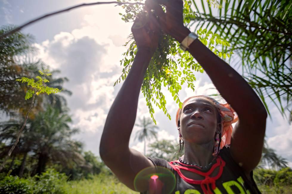 En la aldea de Katfoura ,en las Islas Tristao en Guinea, la organización de la sociedad civil Partenariat Recherches Environnement Medias (PREM) está brindando a las mujeres rurales nuevas oportunidades para generar ingresos y mejorar la vida comunitaria.