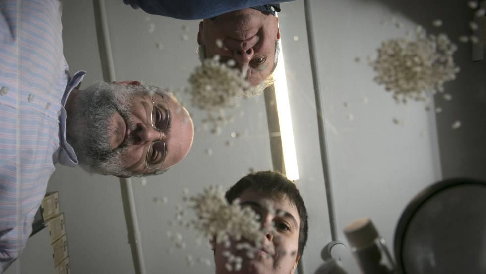 Torrecilla y parte de su equipo, con algunas muestras de arroz, en la Complutense.