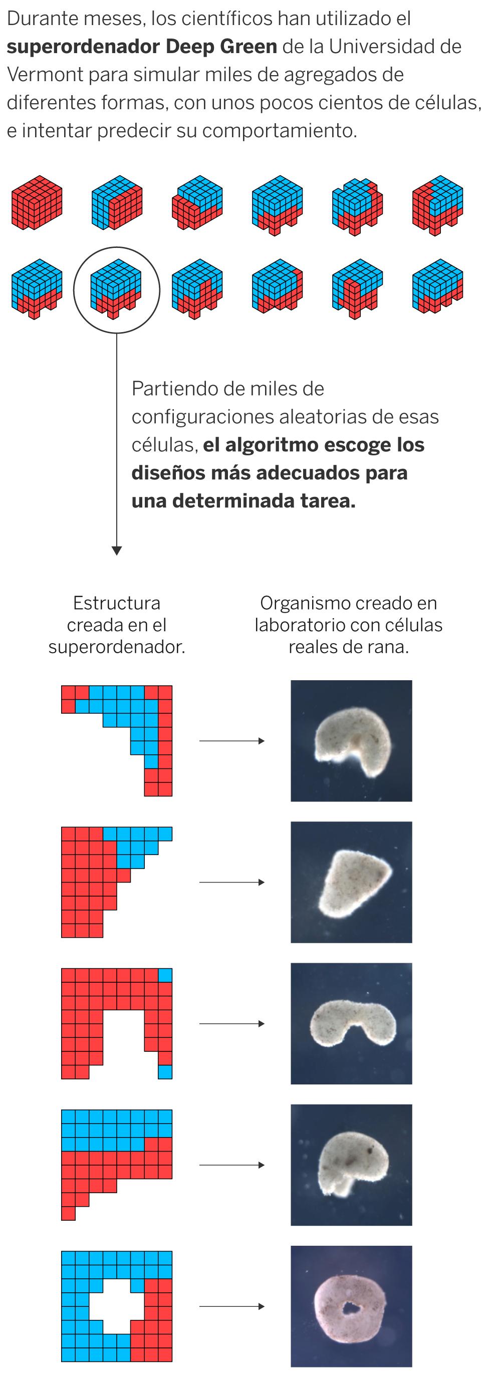Cómo Se Hace Un Biobot Ciencia El País