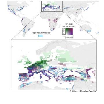 Sobre el mapa global del vino, aparecen las regiones vitivinícolas de Europa. En verde, zonas que ganarán variedades y, en azules morados, las que más pierden.