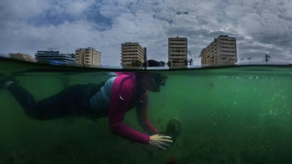 Reportaje | Mar Menor, cuando el desprecio al medio ambiente se vuelve contra nosotros
