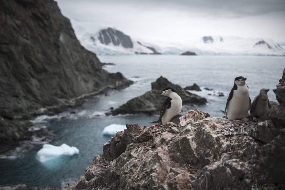 Antartida temperatura