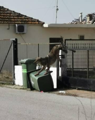 La loba Elisabeth atrapada en un portal, en las afueras de Salónica.