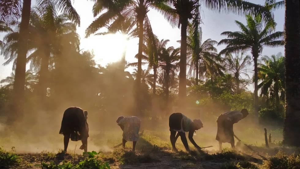 Varias mujeres de los grupos Atingo Yakanto y Nô Djunta Mon limpian sus terrenos.