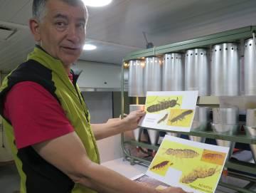 Javier Benayas, en el laboratorio del Hespérides, muestra los colémbolos nativos y los 'invasores'