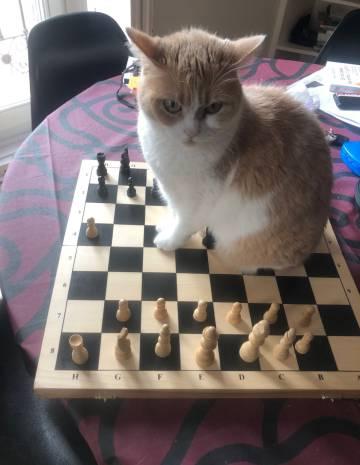 'Mía', en el centro del tablero de ajedrez.