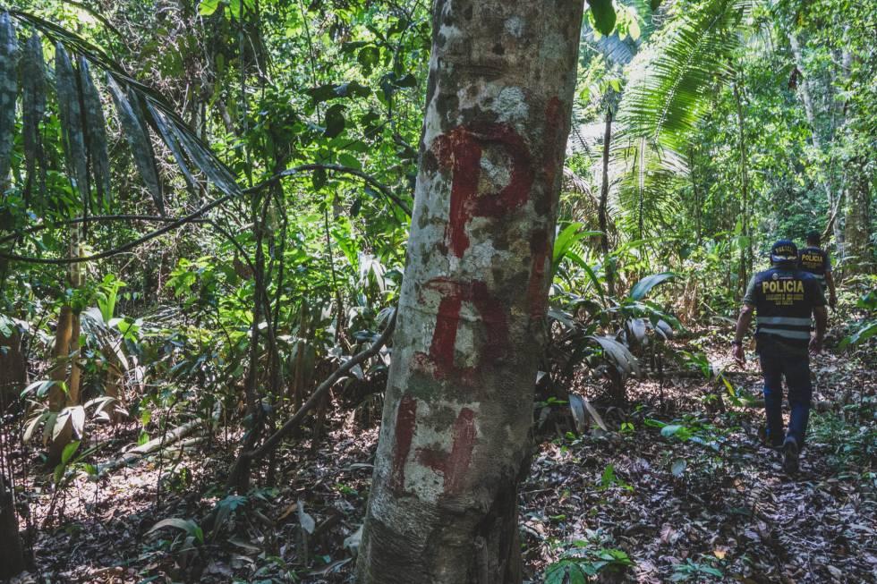 Marca en un árbol de la selva para no perderse en la frondosidad.