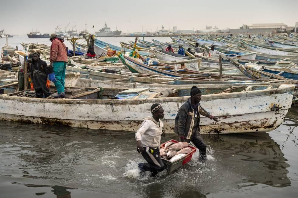 Trabajadores en el puerto pesquero de Nuadibú, la gran ciudad del norte de Mauritania y principio de esta ruta.