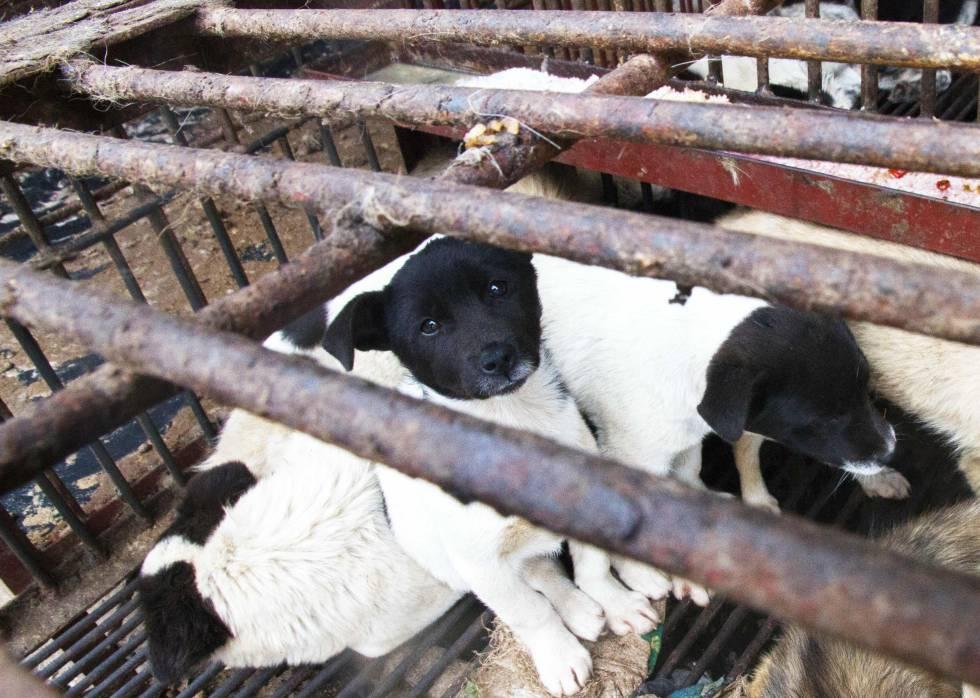 Perros a la venta para comer en el mercado de Wuhan.