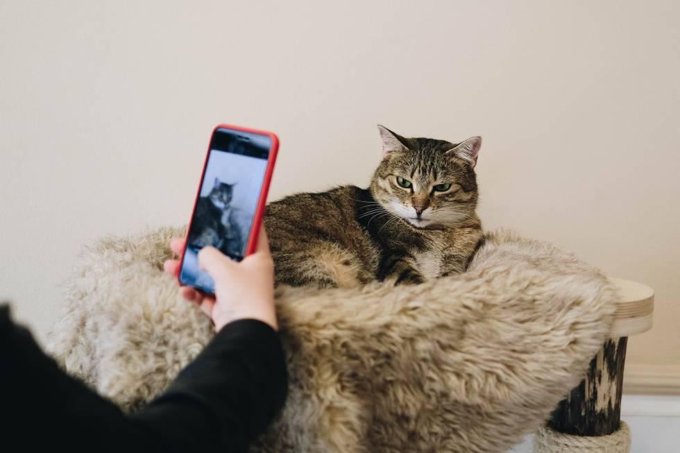 Donde el ojo humano ve un gato enfadado, El Algoritmo ve una extrema necesidad de cariño, un novio nuevo y un jersey de marca.