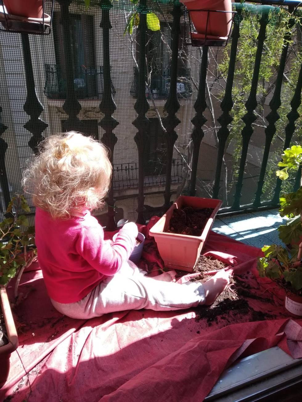 Proponemos comenzar con los peques a germinar semillas y verlas crecer hasta que se conviertan en plantitas