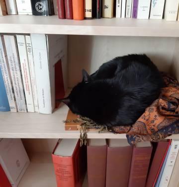 Ryuu, gato de Paloma Díaz-Mas, profesora de investigación del Consejo Superior de Investigaciones Científicas y autora de 'Lo que aprendemos de los gatos'.