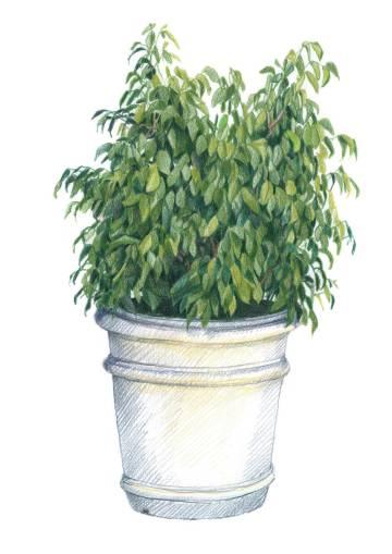 Ilustración de 'Verde al natural', de Santi Sallés.