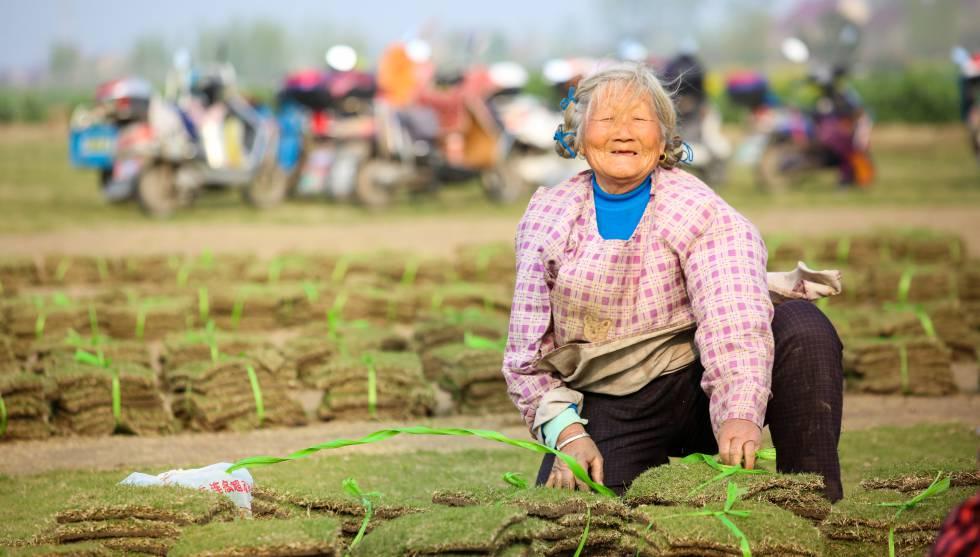 Una agricultora clasifica y agrupa la hierba en una granja en Motou Town (China).