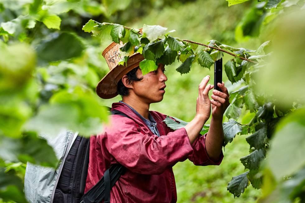 Agricultor introduciendo datos en la aplicación de Mountain Hazelnuts