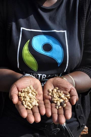 Fairtrade ha anunciado que las organizaciones de productores certificadas pueden usar su Prima Fairtrade de manera más flexible durante este tiempo