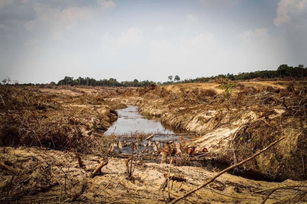 Proceso de tala y evacuación parcial de la cobertura vegetal para instalar el embalse de la central Sinop, Mato Grosso, Brasil.