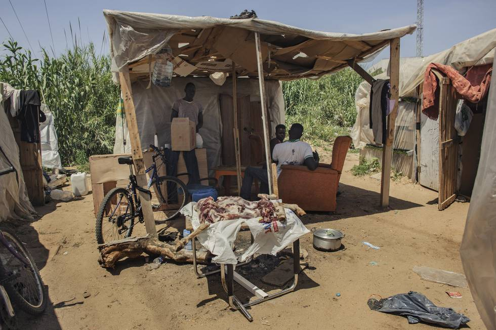 Cordero preparado para cocinarlo en la celebración de final del Ramadán en mayo de este año, en un asentamiento de Lepe (Huelva).