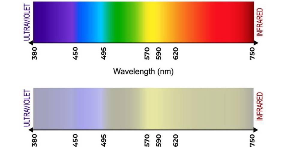 Las diferentes longitudes de onda de la luz se traducen en colores distintos en el sistema visual de un animal. El de arriba corresponde a la vista humana, y el de abajo a la de un perro. Arriba: iStockGetty Images Plus vía Getty. Abajo: esa misma imagen procesada por la Dog Vision Image Processing Tool, de András Péter.