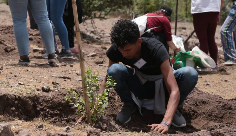 Un joven planta un árbol, una de las iniciativas de '1000 acciones por el cambio'.