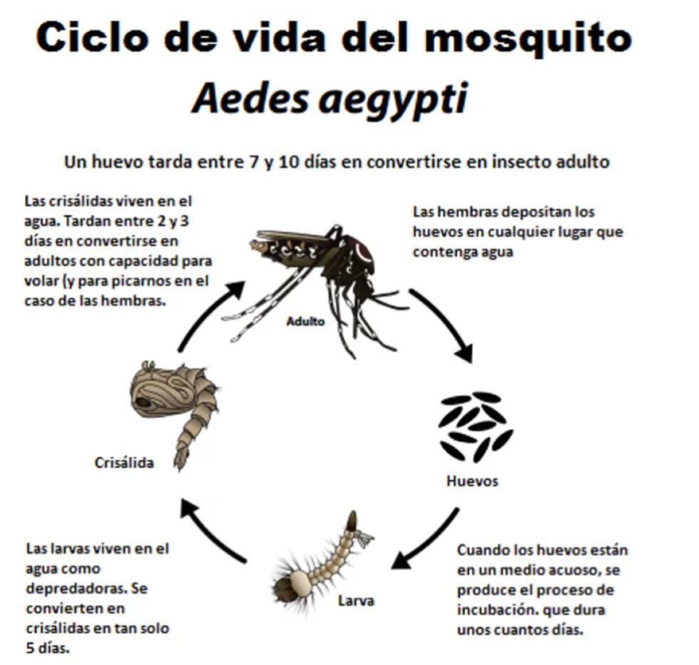 Por qué los mosquitos nos eligieron cómo víctimas hace miles de años