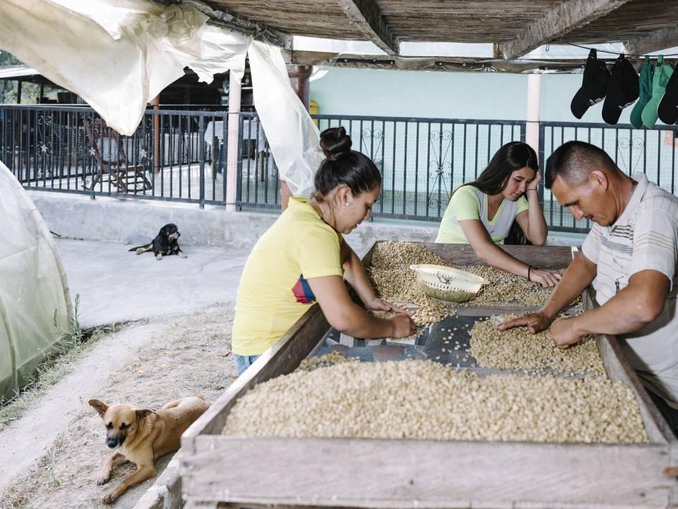 Selección de granos en una finca.
