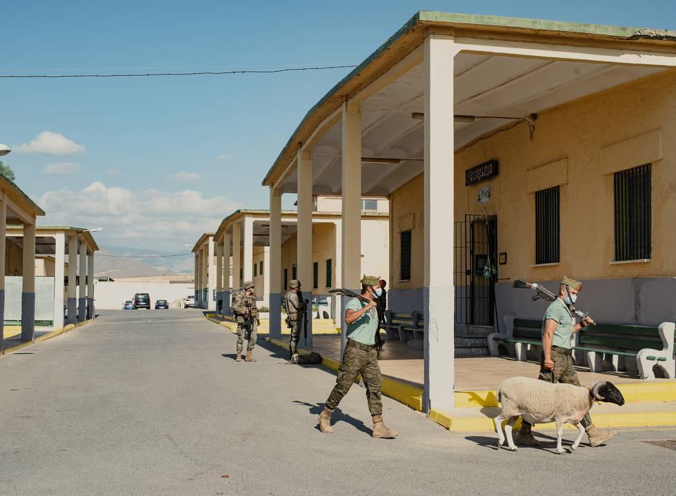 Dos legionarios pasan por el cuartel de Viator con un muflón de mascota.