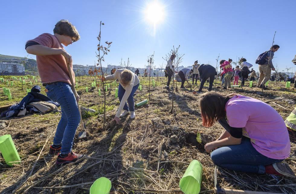 Vecinos de Lisboa plantan árboles.