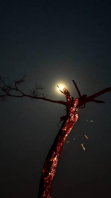 Burning tree in the Bolivian Amazon.
