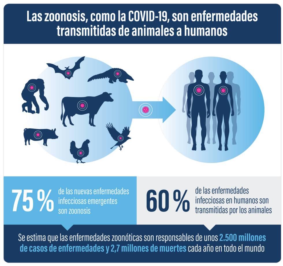 Zoonosis: Se dice de cualquier enfermedad propia de los animales que incidentalmente puede comunicarse a las personas.