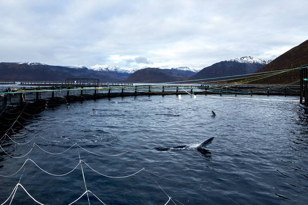 One of the ring facilities where the Norwegian company Lerøy raises salmon in aquaculture