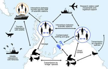 Gráfico sobre las relaciones entre fauna y humanos en la Antártida.