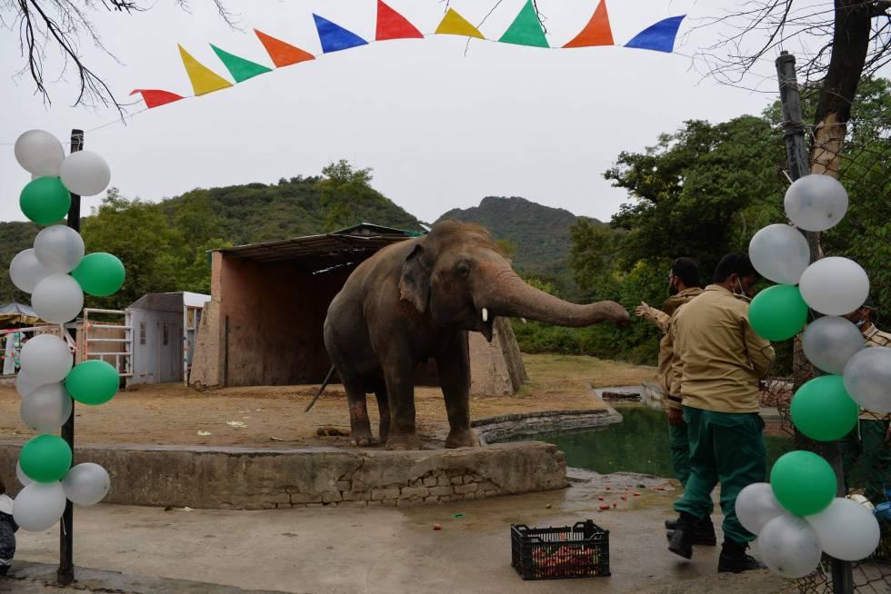 Fiesta de despedida a Kaavan en el zoo de Islamabad, el pasado 23 de noviembre.