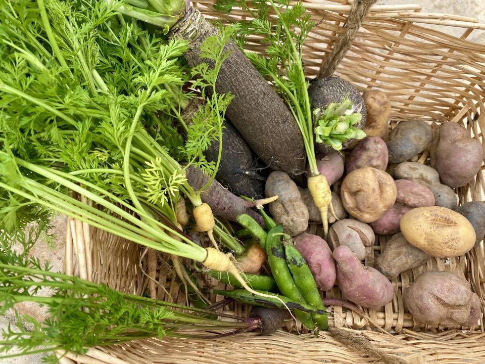 Cesta con zanahorias, guisantes, nabos y patatas feas. J.C. CAPEL