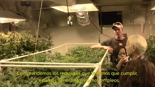 'United States of Marihuana'
