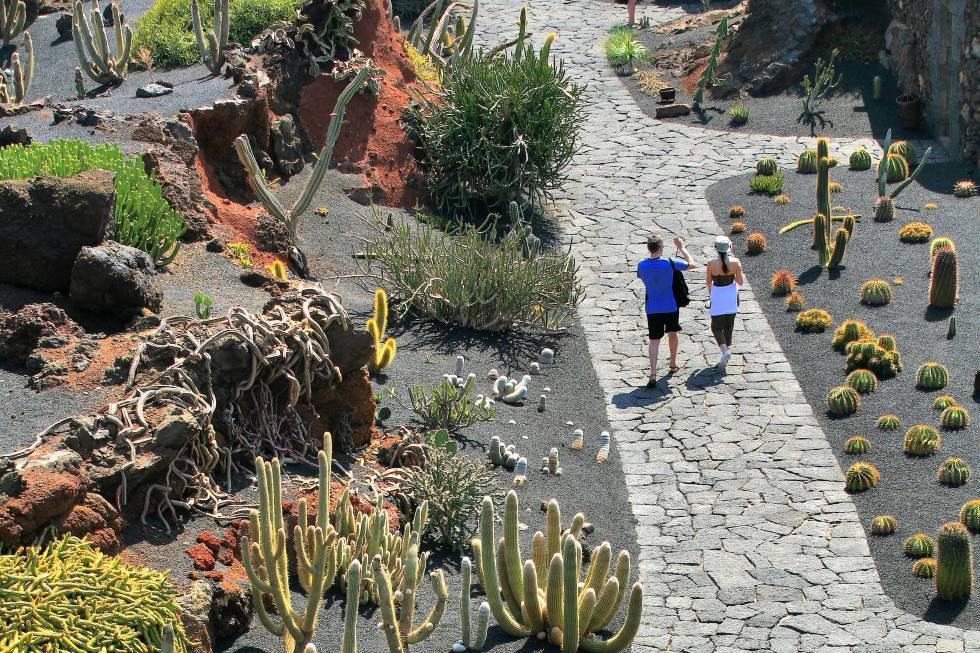 Cactus sobre negro volcánico en Lanzarote | El Viajero | EL PAÍS
