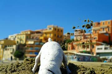 Un perro escarbando en la arena en una playa italiana.