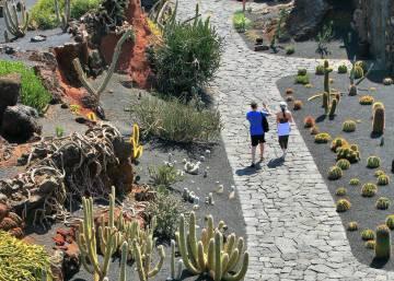 Erudici n en volcanes el viajero el pa s for Informacion sobre el cactus