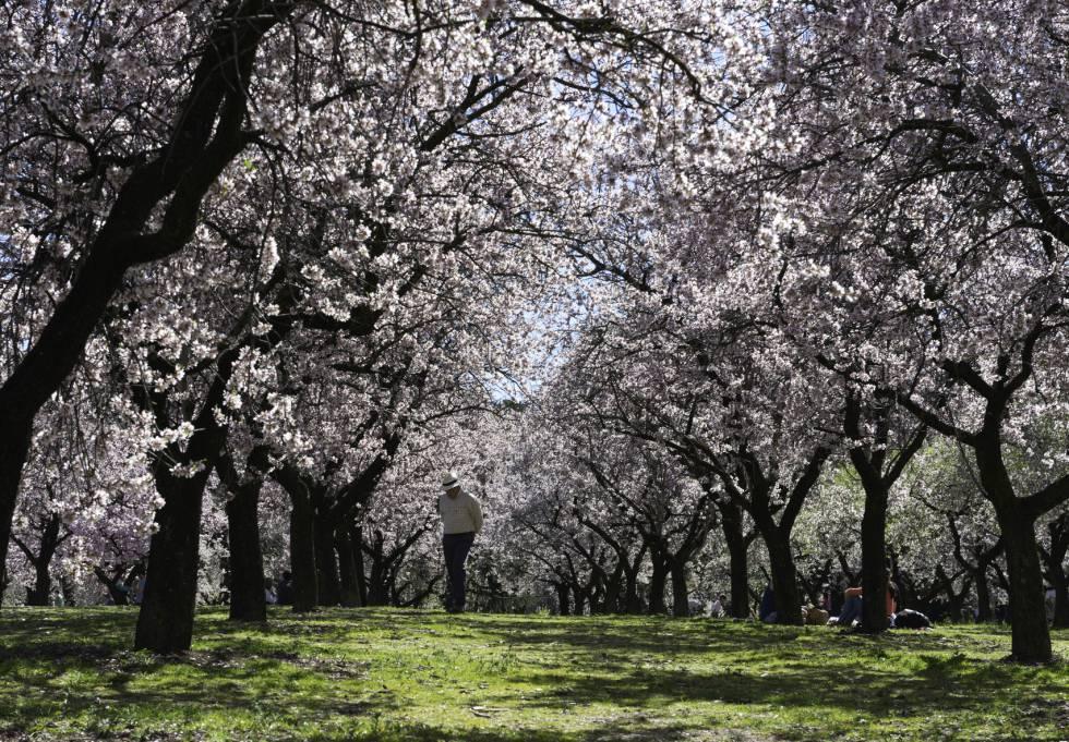 Los 10 mejores lugares para ver los almendros en flor en España